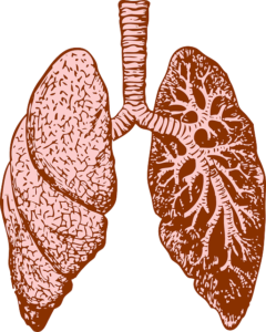 Lungs - workout breathing required abdominal breathing to fill up the bottom portion of your lungs